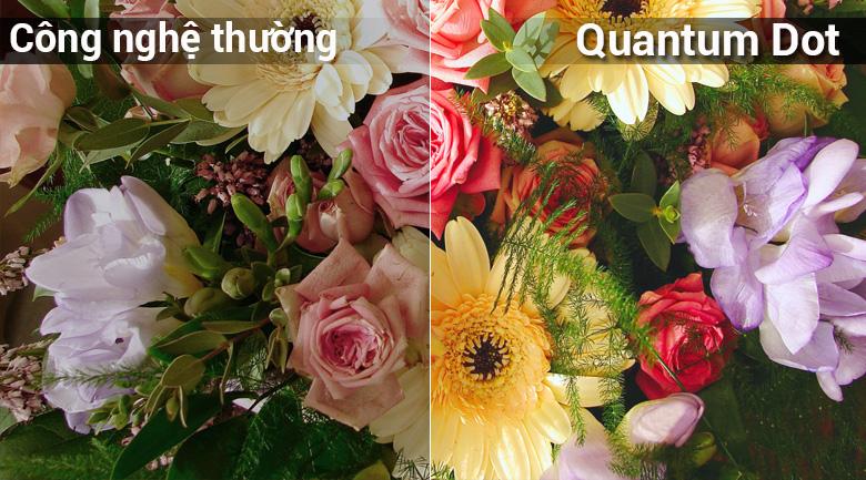 Quantum Dot đem tới hình ảnh sắc nét giúp người xem trải nghiệm tốt nhất